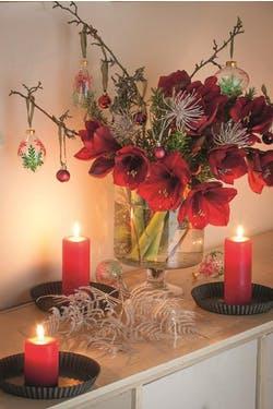velvet amaryllis in vase at christmas